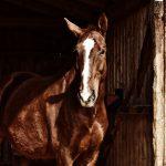 paard 3