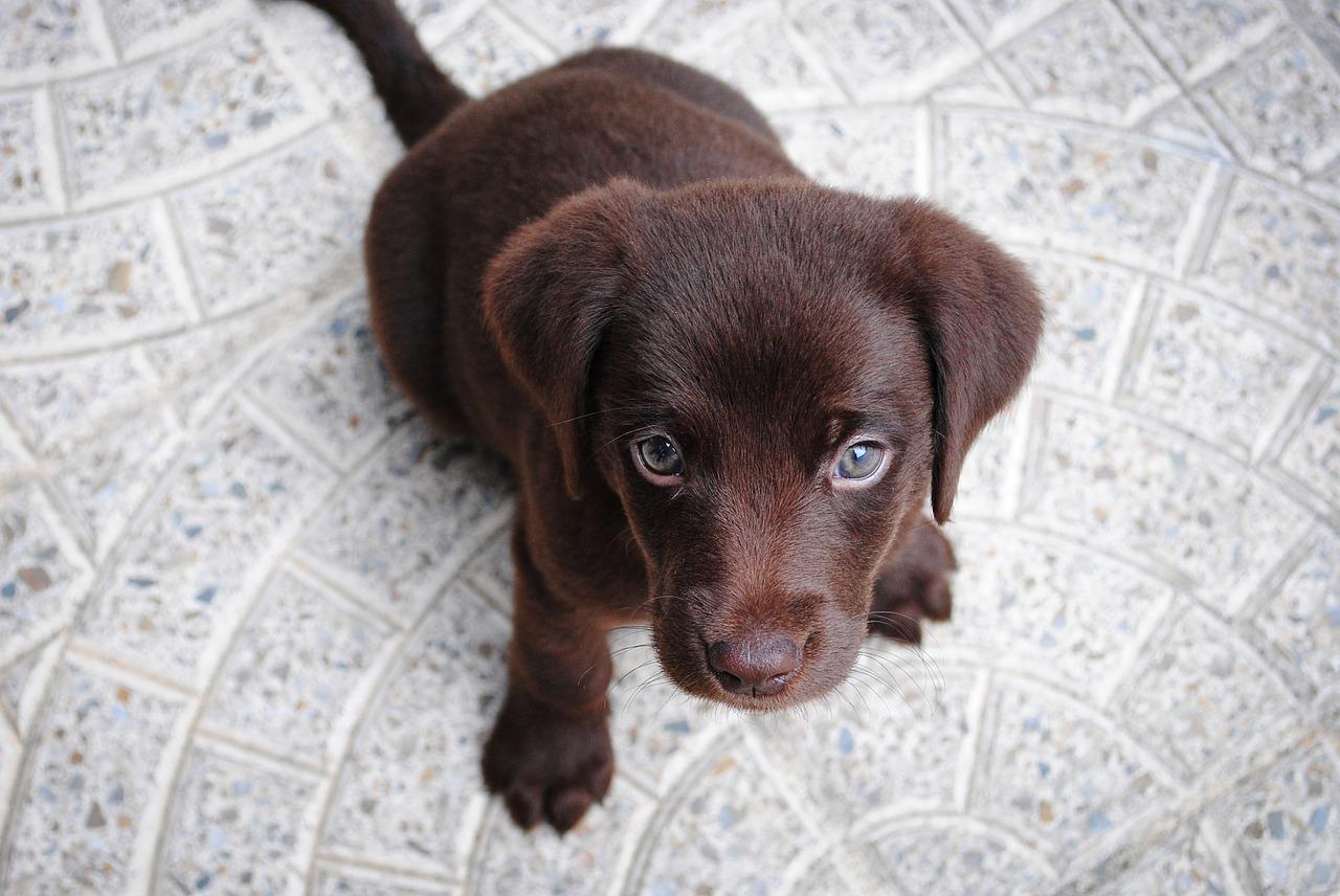 hond aandacht 2