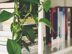 De room divider: een stijlvolle scheiding in je woning