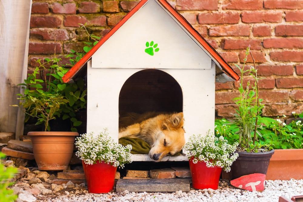 Hondenhok bouwen materialen