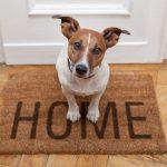 hond alleen thuis laten