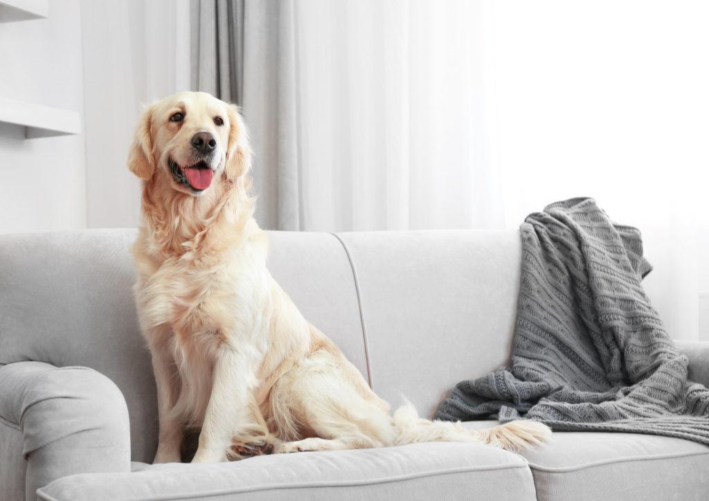 hond leren alleen thuis