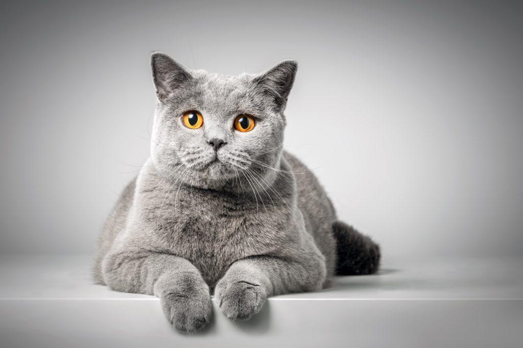 kat nemen in huis