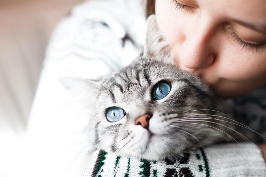 kat nemen
