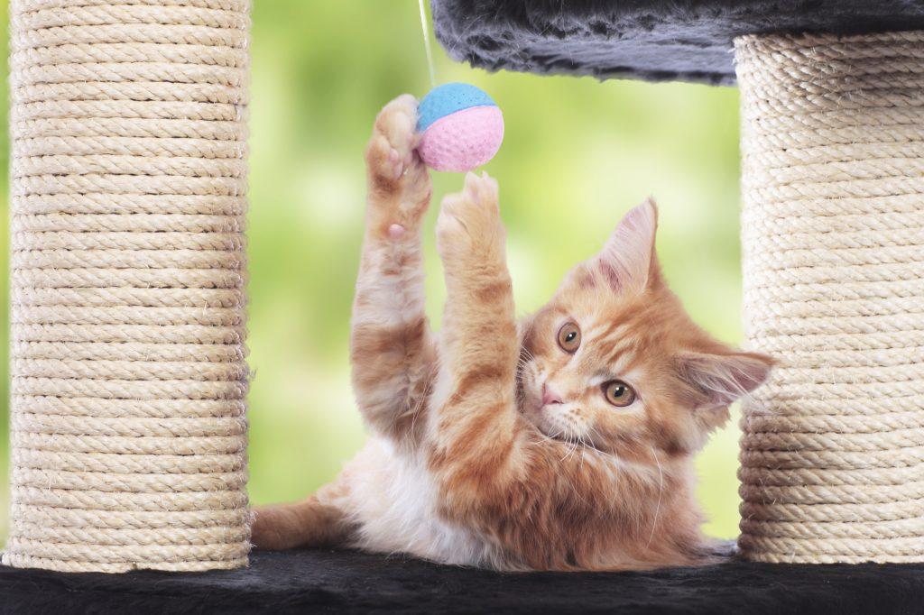 kat spelen