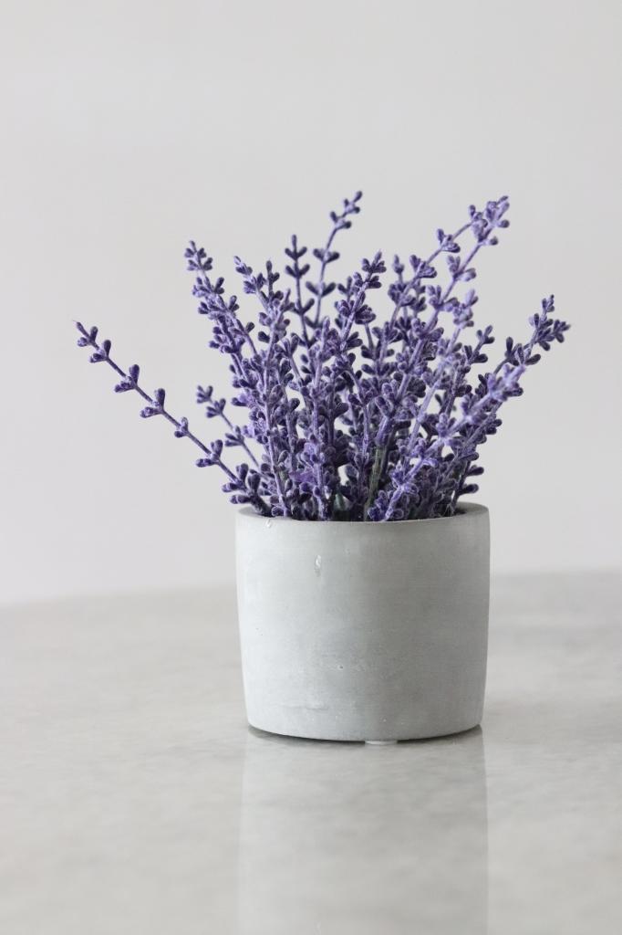 geurende planten voor binnen