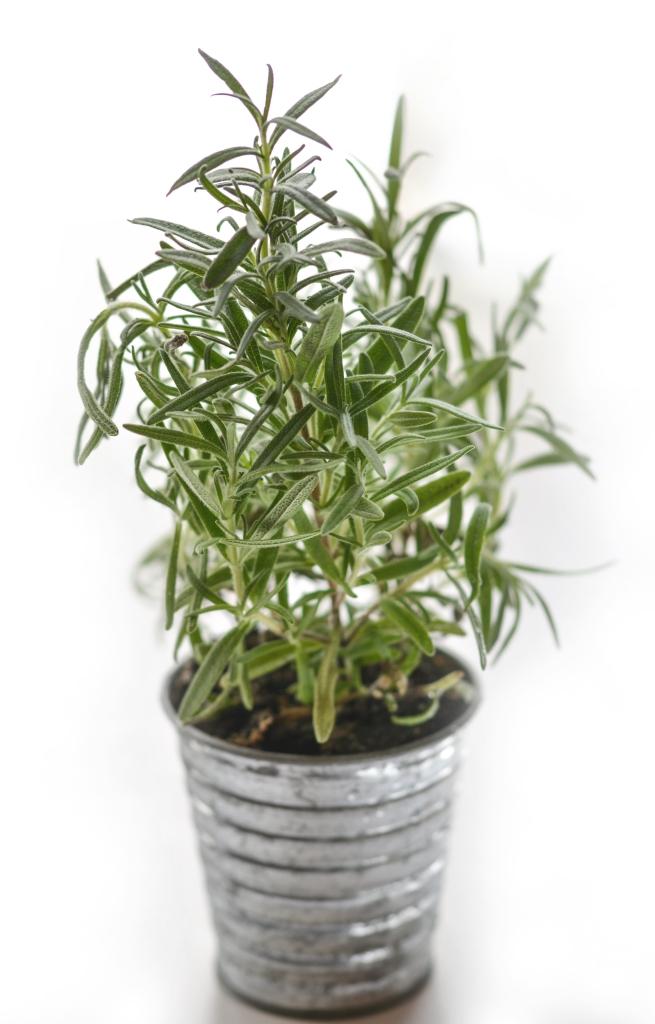 lekker ruikende planten