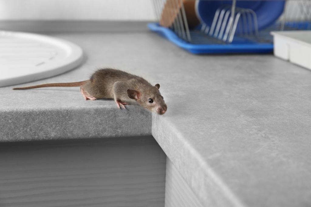 wat te doen tegen muizen