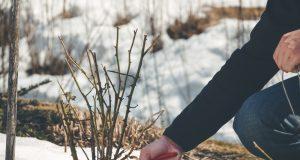 Tuin winterklaar maken 3 tips