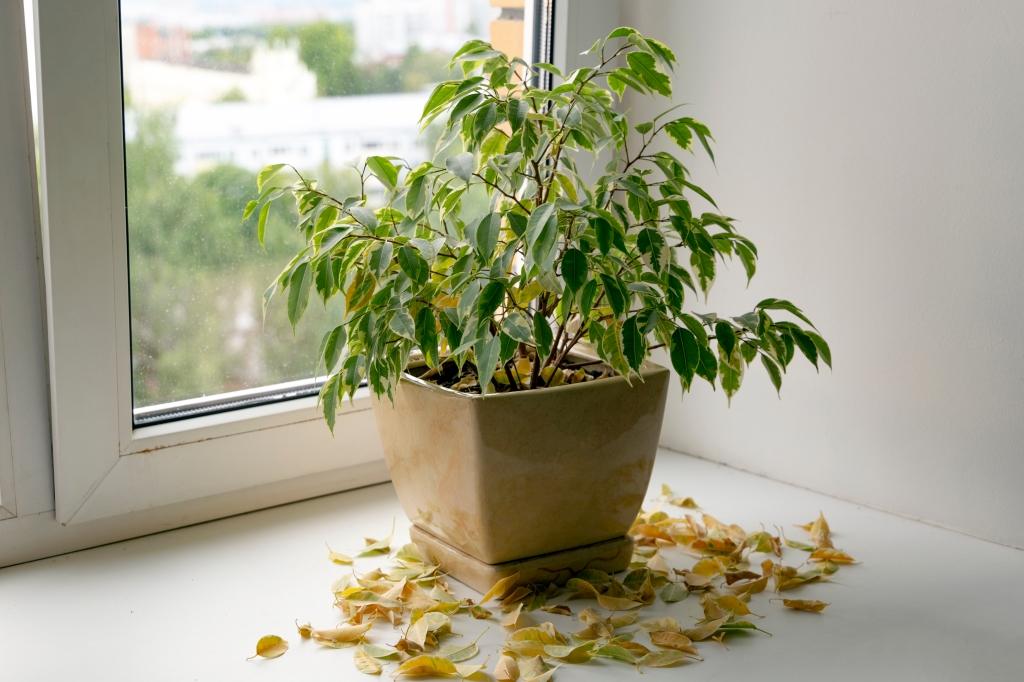 plant redden